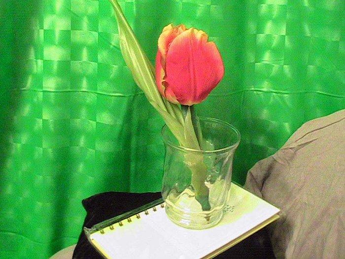 Tulip Gift Set