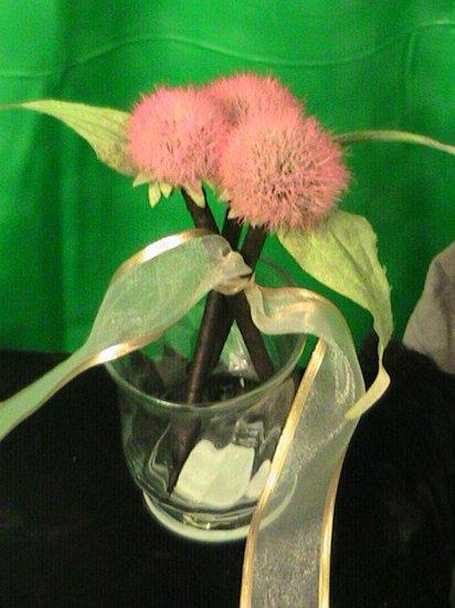The Three Echinacea's Gift Set
