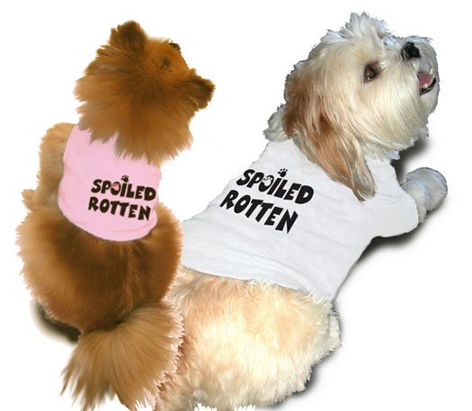 Ruff Ruff and Meow doggie tee- Spoiled rotten