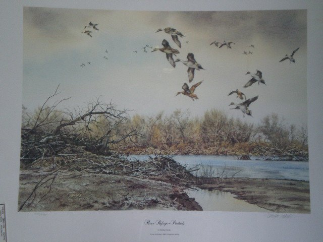 River Refuge Pintails by Eldridge Hardie