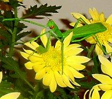 Amazingly lifelike praying mantis