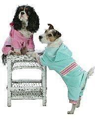 XX Small Dog Pucci Warm Up Suit - Mint