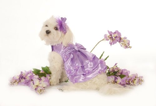 Small Satin Dog Dress With Hat & Leash - Lavender