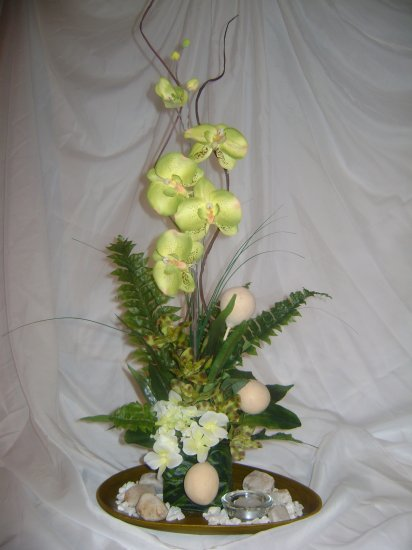 Rima Orchid