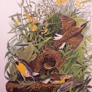 Audubon Bird Print Meadow Lark