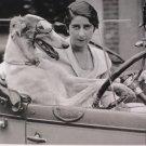 Nouvelles Images Dog Driver Postcard