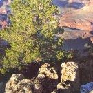 South Rim Grand Canyon 2004 Photography