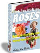 How-to Grow Prize Winning Roses - Resell eBook!