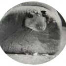 Rat in Bread Round Postcard