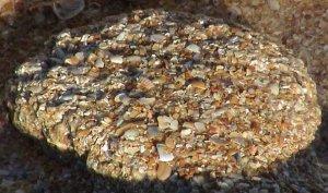 Medium Coquina Stones