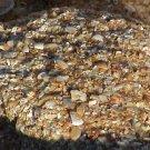 Small Coquina Stones