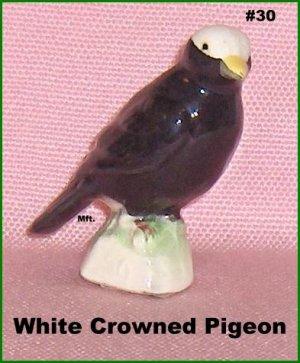 White Crowned Pigeon   Canadian Tenderleaf Tea Bird     Number 30