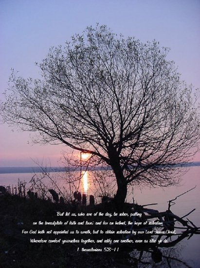 "Tree Silhouette*8""x10"" Matted Origianl Photo**1 Thess.5:8-11"