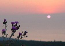 "Bee Balm Sunset**8""x10"" Original Matted Photo"
