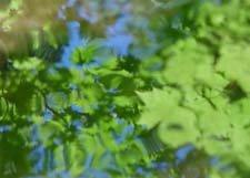 "Blu-Green Colors Dancing**8""x10"" Matted Original Photo"