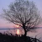 "Tree Silhouette*8""x10"" Matted Original Photo"