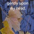 Eagle River-Fall leaves***inspirational