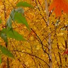 Fall Leaves***Inspirational