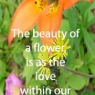 Wild Flowers***inspirational