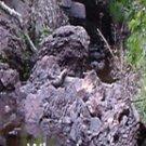 Minnow Creeks***Inspirational