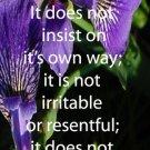 Purple Irises***Biblical/1 Corinth. 13:4-6