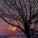 Mason Tree Silhouette***Biblical/Proverbs 23:7
