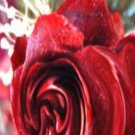 Wooden Rose, Eloquence**Inspirational