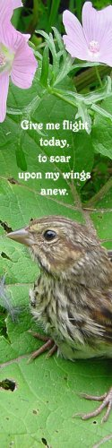 Baby Fledgling**Give me Flight**Inspirational