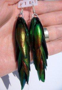 """Real Thai jewel beetle bug wings specimen earrings 3.5"""""""