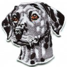 Dalmatian dog canine hound pup puppy cur pet animal applique iron-on patch S-586