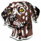 Dalmatian dog canine hound pup puppy cur pet animal applique iron-on patch S-585