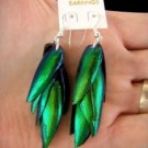 Exotic Thai jewel beetle bug insect wings iridescent blue green earrings new