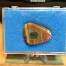 Petrified Wood Polished in Display Case
