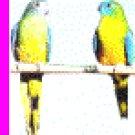 Turquoise Parrots