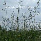"""Grass Seeds 8"""" X 10"""""""