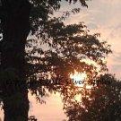 "Sunset Over Greyhound 8"" X 10"""