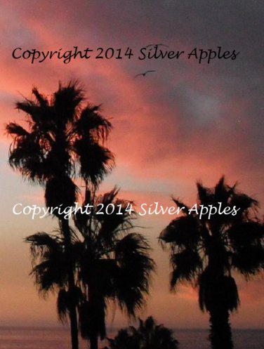 "Redondo Beach Seagulls 8"" X 10"""