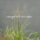 """Grasses Green Against the Grey 8"""" X 10"""""""