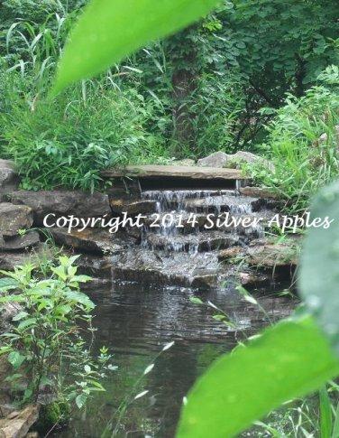 "Koi Pond Falls 5"" X 7"""