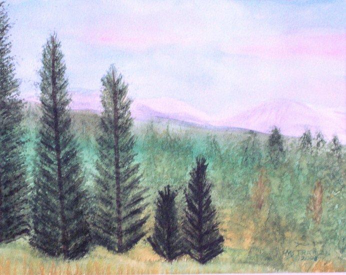 025 Lofty Mountain Pines