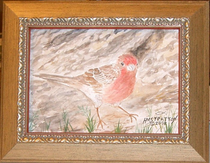056 House Finch, framed