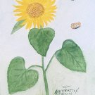 063 Lynn's Sunflower