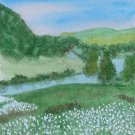 093 Field of Daisies, Upper Margaree Valley