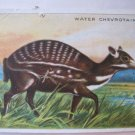"Vintage Hassan Cork Tip Cigarettes Animals Card Water Chevrotain 3.25"" by 2.5"""