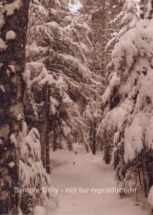 """Snowy Trail"" - 5x7 - Original Sepia Photo - signed"