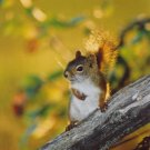 """The Squirrel"" - 5x7 - Original Color Photo - signed"