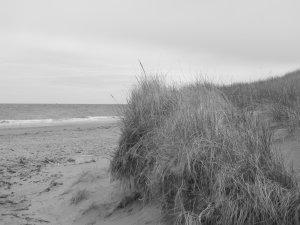 """Dune"" - 8x10 - Original Black and White Photo - signed"
