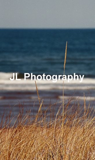 """Beach Grass"" - 5x7 - Original Color Photo - signed"