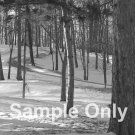 """Winter Pines"" - 8x10 - Original Black and White Photo - signed"