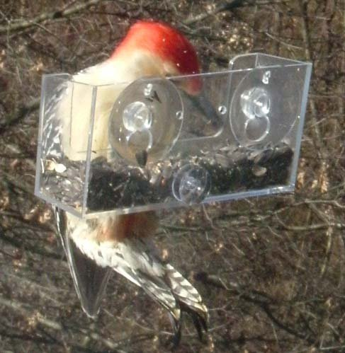 NO POOP BIRD FEEDER THESE NEW NO POOP WINDOW BIRD FEEDERS ARE WORTH DISCOVERING!  GREAT GIFTS!